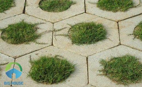 chọn gạch lát sân vườn trồng cỏ